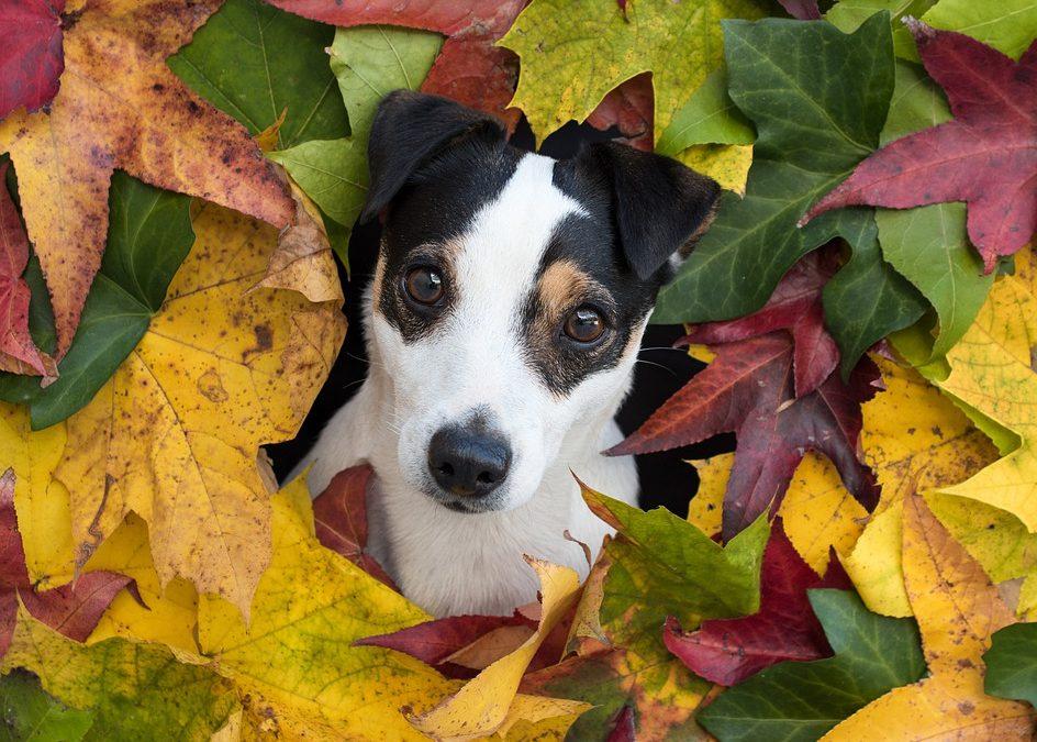 Hunden – menneskets bedste ven